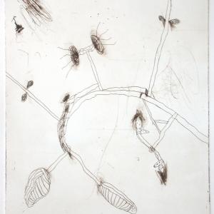 Strange Fruit I, etching, edition 10, image size 29.5 X 24.5 cm, 2005