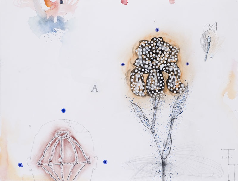 'Natural History' series, mixed media on paper, 50 X 66 cm, 2010 (collection Bea Goethart)